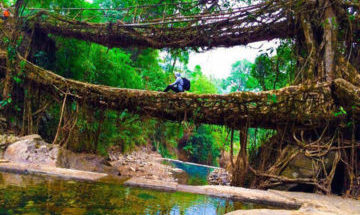 Guwahati-Shillong-Cherrapunji-Dawki-Kaziranga Assam Tour Package 4 Nights 5 Days 5